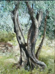 Olivo aretino 1 - 40x30 - olio su tela