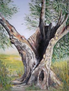 Olivo aretino 2 - 40x30 - olio su tela